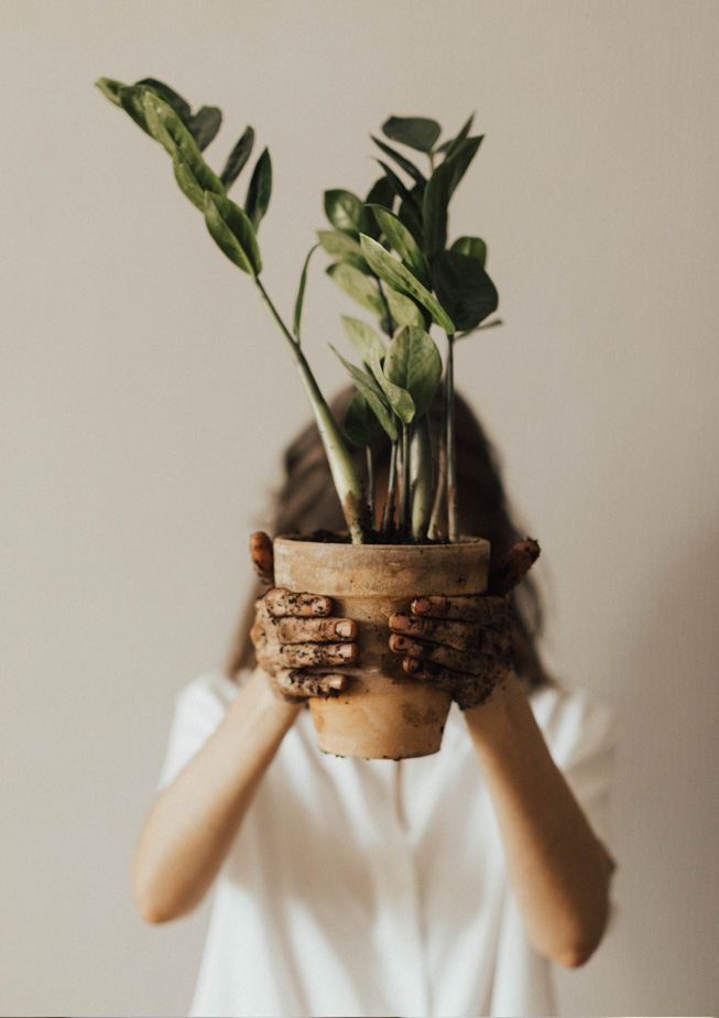 Pflanzen Ableger selber ziehen | FREE MINDED FOLKS