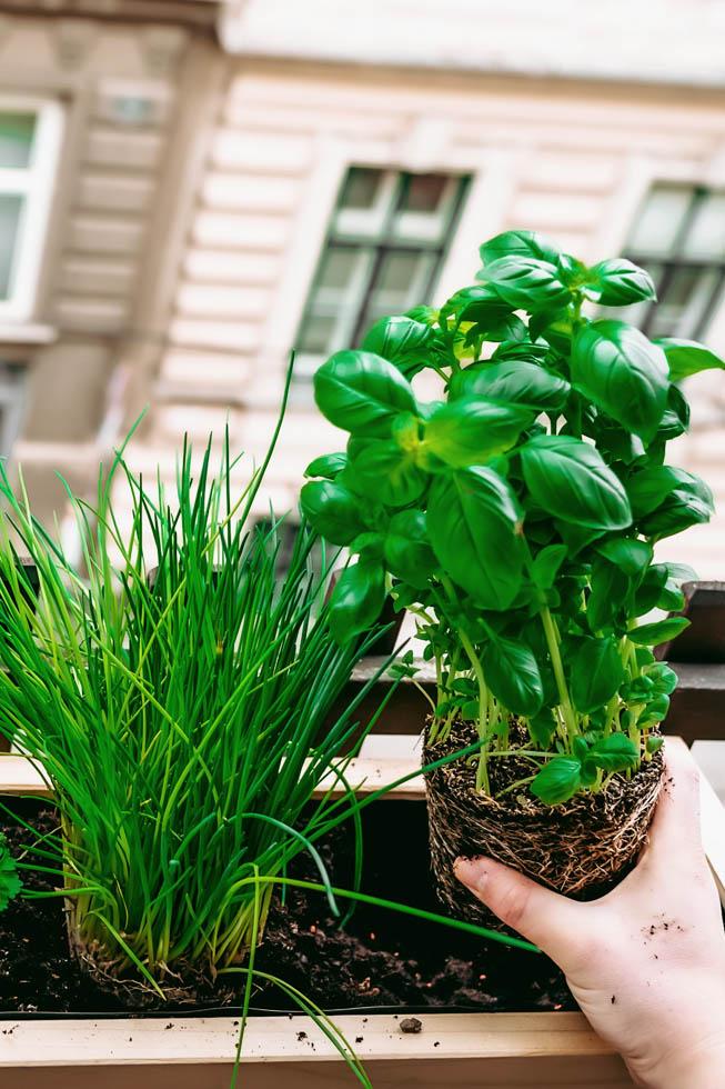 Urban Gardening: Balkon Sommerfit machen | FREE MINDED FOLKS